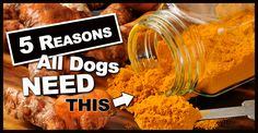 If you cook, you may already be familiar with turmeric, but for first timers, here's a quick culinary lesson to get us started using turmeric for dogs.