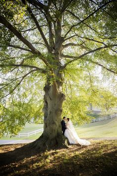 Bride and Groom at Rose Tree Park by Krista Patton Photography