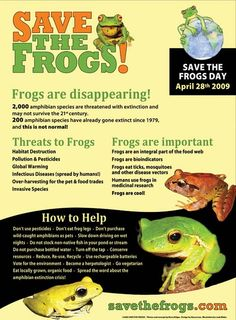Google Image Result for http://www.savethefrogs.com/gifts/posters/images/how-to-help-frogs-poster-500px.jpg