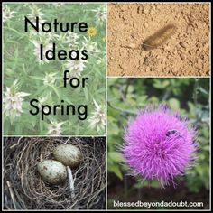 It's Spring! Nature Ideas for Spring! Lots of FUN activities!