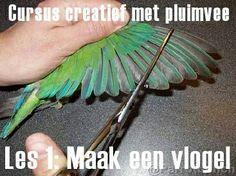 Cursus #creatief met #pluimvee