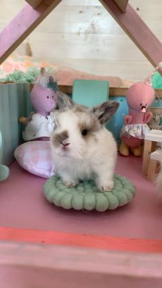 Oct 2019 - Is there anything cuter then a baby bunny playing in a dollhouse? Baby Animals Super Cute, Cute Baby Bunnies, Cute Little Animals, Cute Funny Animals, Cute Dogs, Fluffy Animals, Animals And Pets, Coelho Lion, Bunny Cages