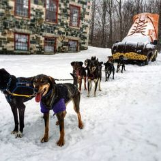 These sled dogs want to go on a run with the #LLBean Bootmobile!   (Disclaimer: these dogs did not tow the Bootmobile)