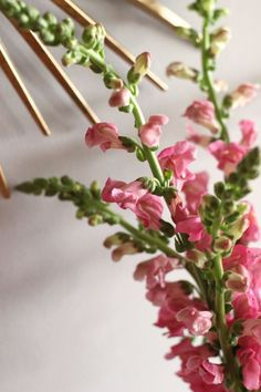 snapdragon flower, s