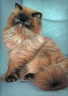 Cat Drawing - Persian Cat by Nicole Zeug Himalayan Persian Cats, Himalayan Cat, How To Cat, F2 Savannah Cat, Creation Photo, Domestic Cat, Animation, Illustrations, Cat Drawing