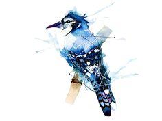 Blue Jay Bird Tattoo Designs Dhbluejaymini1.jpg