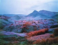 """Richard Mosse, """"At Home he is a Tourist"""", photographie, 2012."""