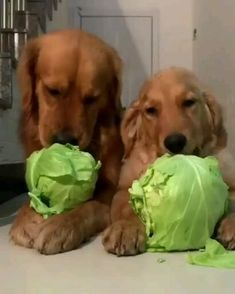 Cute Funny Animals, Cute Baby Animals, Funny Dogs, Animals And Pets, Cute Puppies, Cute Dogs, Dogs And Puppies, Cute Babies, Doggies