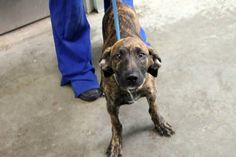 Fender: 3-month-old hound sweetheart is out of time at high-kill SC shelter