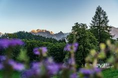 Die schönsten Berghotels für den Schweizer Bergsommer Das Hotel, Do Love, Switzerland, Mountains, Nature, Travel, Perfect Place, Albania, Gap Year