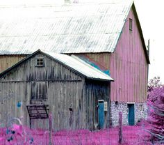 Pink barn print by Stephan Chagnon Horse Barns, Old Barns, Horses, Rustic Photographs, Country Barns, Country Living, Country Scenes, Barn Quilts, Old Buildings