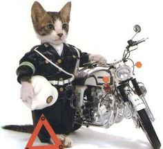 SAFETY CAT!