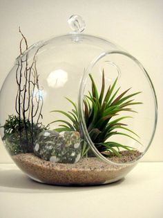 Tiny air plant and moss ornament terrarium. Description from pinterest.com. I searched for this on bing.com/images