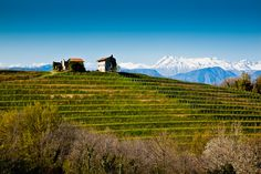Colli Orientali del Friuli - Ruttars, Friuli   Italy