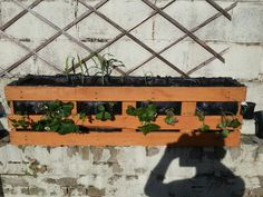 DIY Pallet Planter made from reclaimed wood cost me about 3 pound. Follows the angles of my wall o fits perfectly