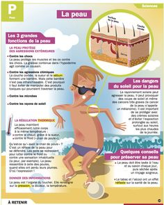Science infographic and charts La peau Infographic Description La peau – Infographic Source – French Teacher, French Class, French Lessons, Ap French, Study French, Science Education, Kids Education, Science Boards, Human Body Parts