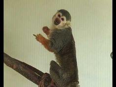 Monkey gives the finger!