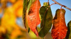 Color strokes by Sven Olav Vahlenkamp on Autumn Day, Nature Photography, Leaves, Sky, Blue Skies, Pumpkin Spice, Summer, Celebration, Colorful