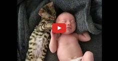 Bengal Cat Stays Close to Newborn Baby...