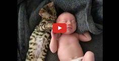 Bengal Cat Stays Close to Newborn Baby...