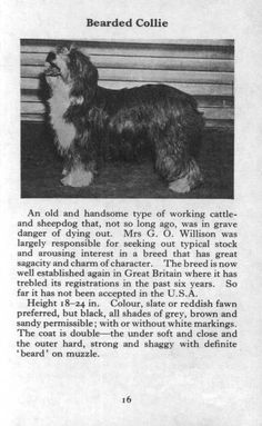 Bearded Collie 1970 Vintage DOG Print Matted | eBay