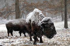 Winter white - The Boston Globe