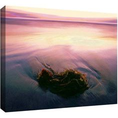 Dean Uhlinger Twilight Kelp Gallery-Wrapped Canvas, Size: 24 x 32, Pink