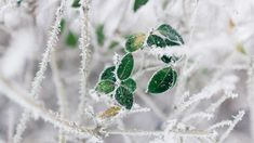 ITAP of green life in winter Winter Images, Winter Pictures, Holiday Images, Nature Wallpaper, Wallpaper Backgrounds, Wallpapers, Eye Of The Storm, Green Photo, White Picture