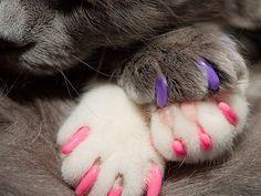 Des protège-griffes pour chats et chiens