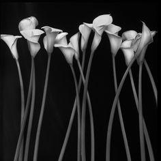 Black and White Photography...  http://photoxity.com/human-bone-puzzle/