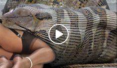 [Video] Obrovský had prežíva ženu nažive (sk.videocuz.com)