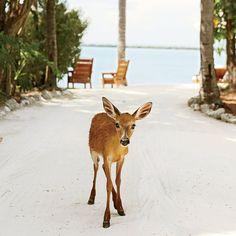 Big Pine Key, Florida - 10 Best Places on the Coast to See Wildlife - Coastal Living