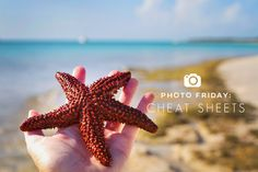 Photo Friday: Cheat Sheets! LAHOWIND   Sailing Blog   lahowind.com