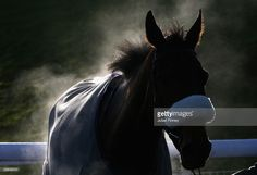 A horse is seen after the third race during Chepstow Races on December 28, 2009 in Chepstow, Wales.