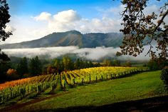 The picturesque Tualatin Valley in the northern Willamette Valley offers something for everyone. Tualatin Valley makes a great day trip from Portland. Oregon Wine Country, Willamette Valley, Oregon Coast, Solo Travel, Day Trip, Places To See, Portland, Gem, Washington County