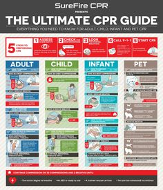 """Everything You Need to Know for Adult, Child, Infant and Pet CPR 5 Steps to Performing CPR Assess Scene Safety Check the area for any saftey hazards that may be harmful to you. Check for Responsiveness Tap the victim's shoulder and shout, """"Are you OK"""" Look for Normal Breathing Look for Normal Breathing Call 9-1-1 […]"""