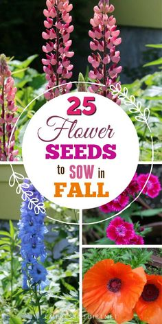 flower garden care If you live in a cold climate, there are plenty of annual and perennial flower seeds you can sow in the fall garden for flowers in the new year. Cut Flower Garden, Beautiful Flowers Garden, Flower Gardening, Container Gardening, Fall Flower Gardens, Beautiful Gardens, Garden Types, Garden Care, Box Garden