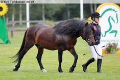 Finnhorse stallion Tussarin Luonnos