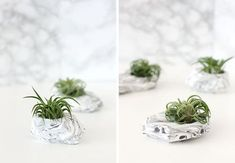 DIY Marble Air Plant Holder | Why Don't You Make Me