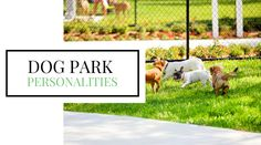 Ever been to the #dog park? Then you may be familiar with these dog park personalities: http://www.entirelypets.com/dog-park-personalities.html?utm_source=twitter&utm_medium=web&utm_campaign=eptwpostarticle