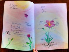 Waldorf ~ 5th grade ~ Botany ~ Secret of Nature ~ main lesson book