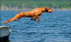 """""""Posing for a hood ornament for the new Vizsla sports car"""" ... no, wait a minute, how about """"projectile""""?"""