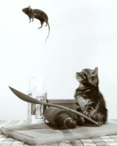 Cat Mouse Jump / Funny and Cute Animals Animals And Pets, Funny Animals, Cute Animals, Crazy Cat Lady, Crazy Cats, Cute Cats, Funny Cats, Cat Mouse, Cat Art