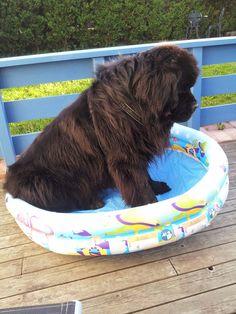 newfies - Google zoeken,  Does this pool make me look fat?