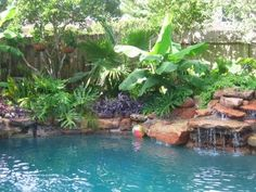 best pool plants | In this Swimming pool landscape bananas team up with palms and split ...