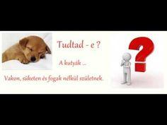 Tudtad ? Érdekességek kutyákról.. Dogs, Doggies, Pet Dogs, Dog