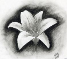 Explore collection of Charcoal Drawing For Beginners Easy Pencil Drawings, Easy Charcoal Drawings, Pencil Drawings For Beginners, Easy Flower Drawings, Beginner Sketches, Charcoal Sketch, Flower Sketches, Drawing Sketches, Drawing Ideas