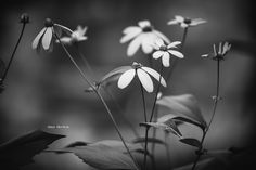 Wildflowers in B&W by tina thelen on 500px