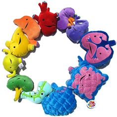 plush internal organs: brain, intestine with appendix!, heart, stomach, liver, bladder, spleen, pancreas, lung, gall bladder, and kidney.