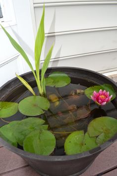 container water garden from home story
